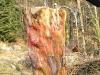 grieswurz-zauberweg-am-hasenhorn-todtnau-thomas-rees-262