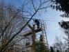 Lebensbaum, thomas rees 150