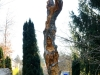 Lebensbaum, thomas rees 153