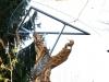 Lebensbaum, thomas rees 154