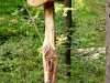 Hexenring , Riesenpilz, thomas rees 27