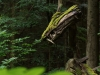 Sternwalddrache 2014, thomas rees 03