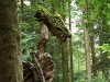 Sternwalddrache 2014, thomas rees 07