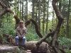 sternwalddrache-260
