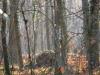 das Waldtor, in Freiburg-Waltershofen  , thomas rees 17