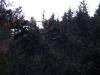 windbohrer-schauinsland-april-2012-thomas-rees-403