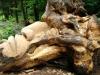 waldmenschen-thomas-rees-450