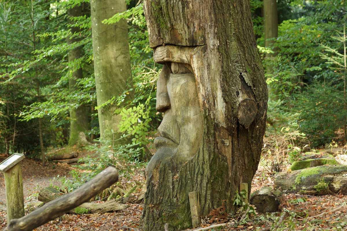 WaldMenschen 2013, thomas rees 632