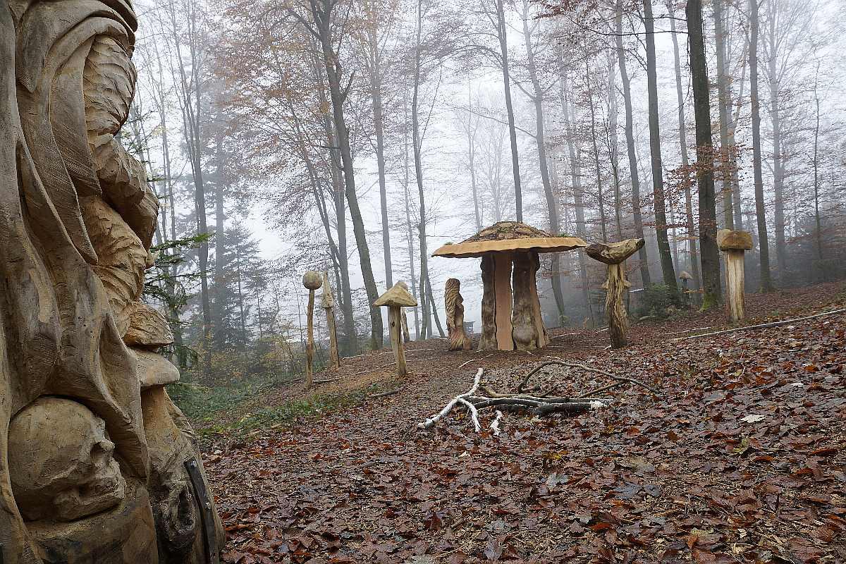 "Mycelium, ""Novembergrau"", thomas rees 09"