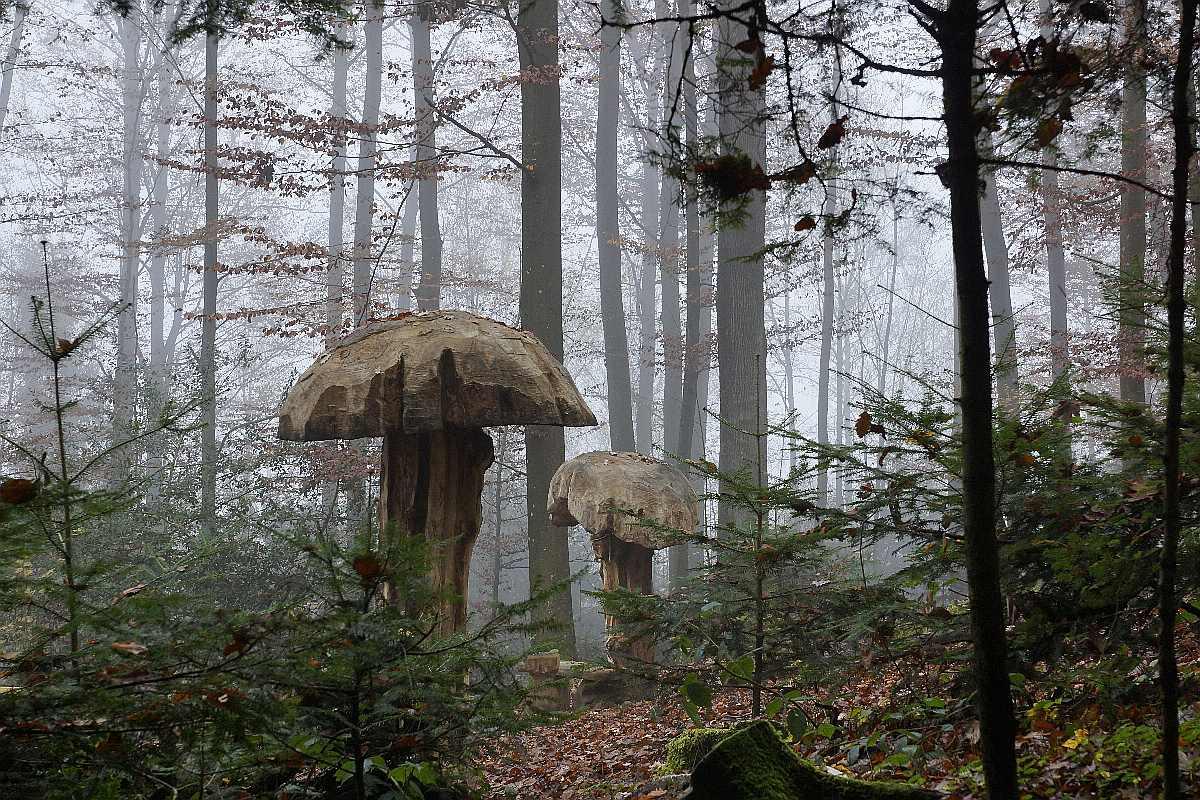 "Mycelium, ""Novembergrau"", thomas rees11"
