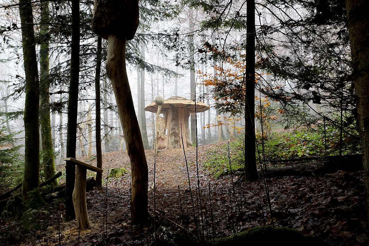 "Mycelium, ""Novembergrau"", thomas rees17"