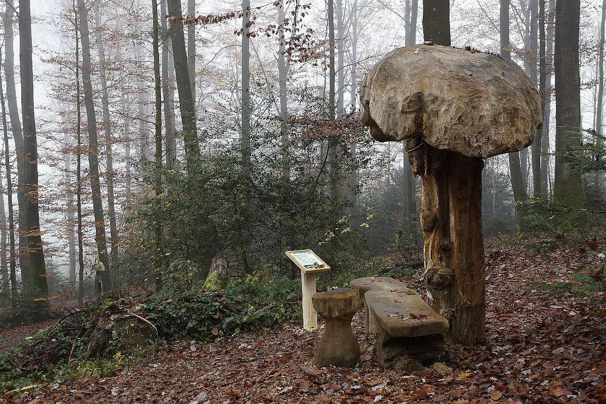 Mycelium, Novembergrau, thomas rees 33