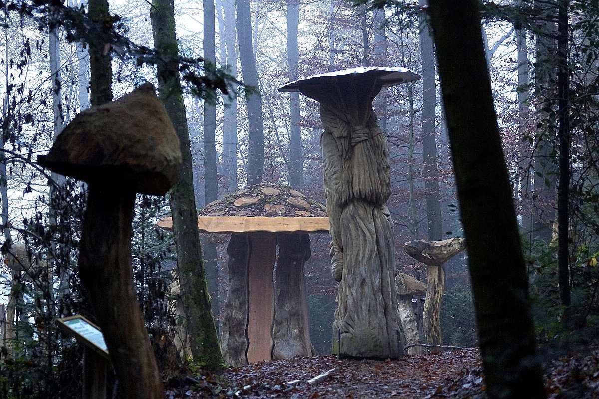 Mycelium, Novembergrau, thomas rees 60
